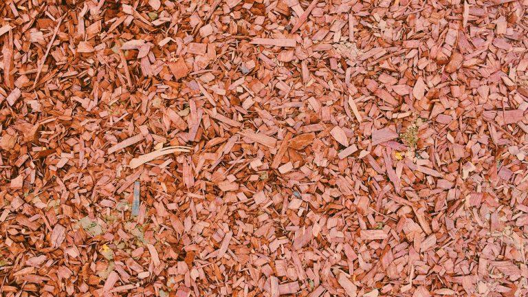 Petitie tegen biomassa krijgt veel steun